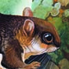 Bartel's Flying Squirrel / Hylopetes bartelsi