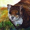 White-bellied Giant Flying Squirrel / Petaurista albiventer
