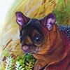 Spotted Giant Flying Squirrel / Petaurista elegans