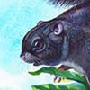 Siberut Flying Squirrel / Petinomys lugens